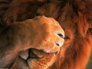 lion_face_palm