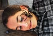 tarantula_face_ls