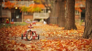 Bicycles-In-Autumn-Wallpaper-Desktop